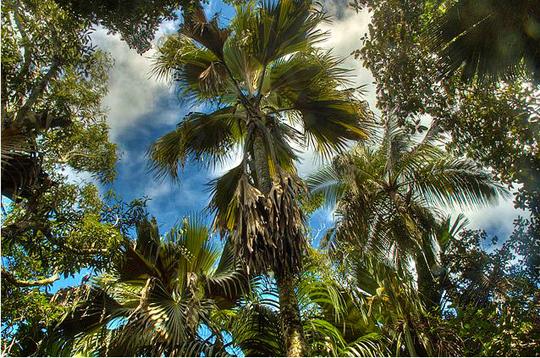 vallee de mai seychelles
