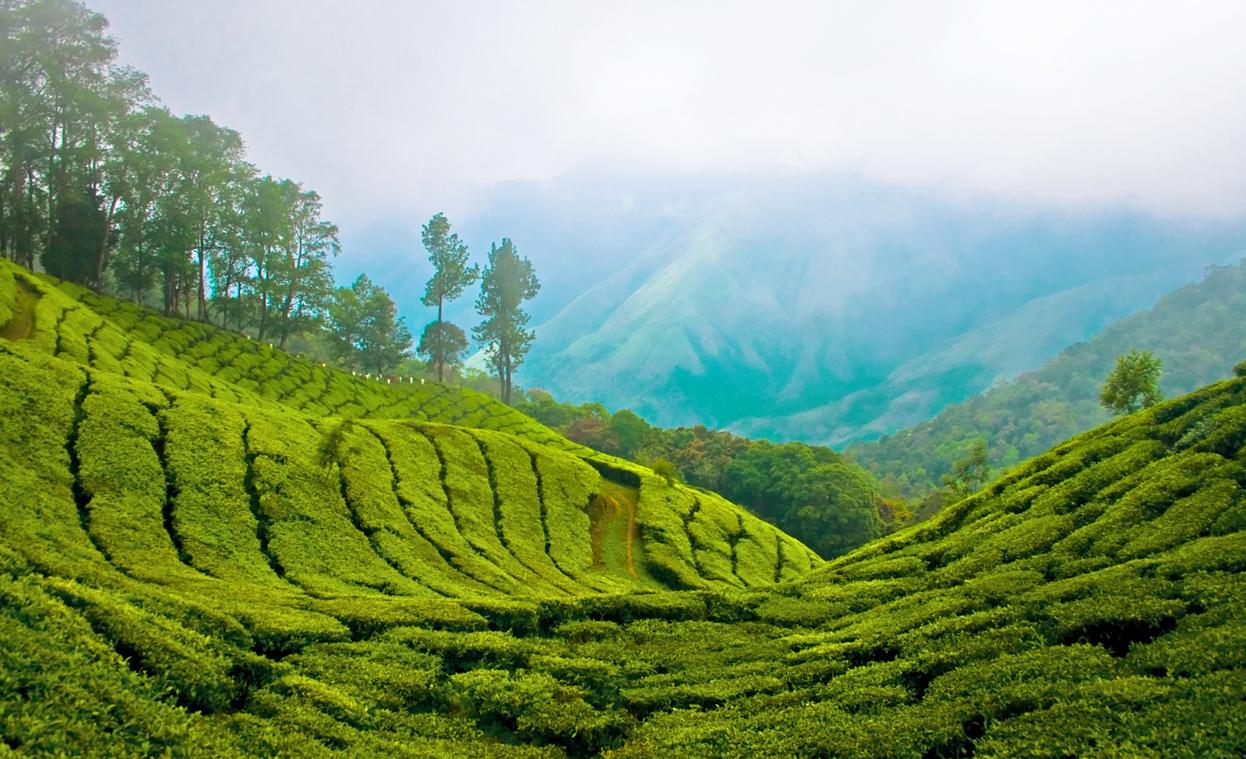 Lush Tropical Gem Travel The World