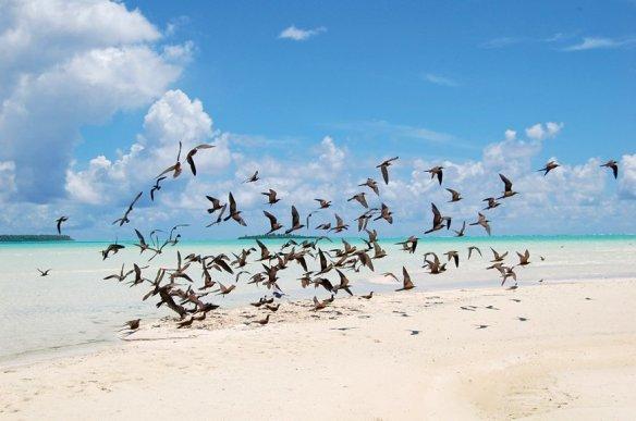 brando island french polynesie (4)
