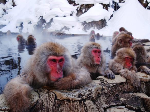 snow monkey hot spring