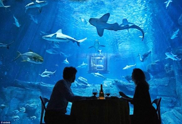 underwater accommodation sharks